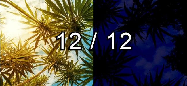 12/12 Light Schedule