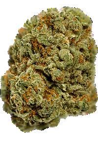 Afghan Kush Seeds Bud