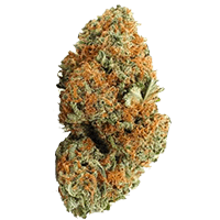 Agent Orange Weed Bud