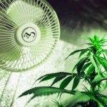 Grow Fans and Marijuana Growing