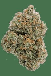 Alien OG Seeds Bud