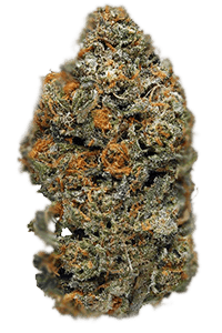 Animal Cookies Seeds Bud