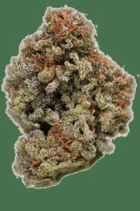 Berry White Seeds Bud