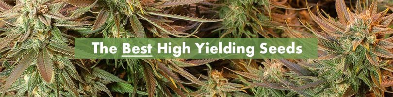 Best High Yielding Seeds Featured Image