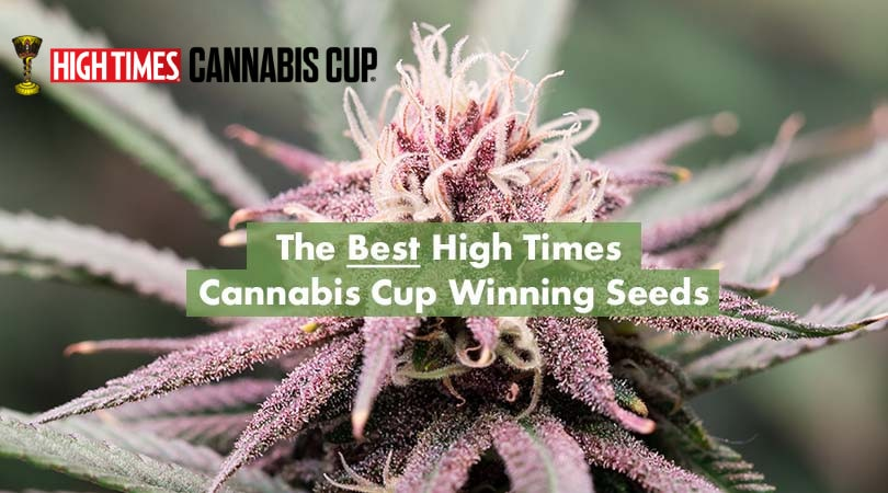 Best High Times Cannabis Cup Winners Seeds