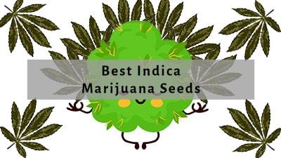 Best Indica Seeds