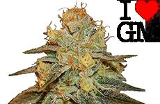 Bruce Banner Feminized Seeds ILGM