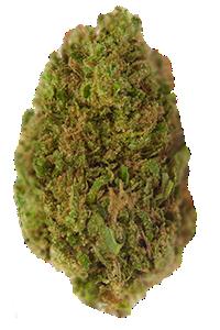 Bubba Kush Seeds Nug