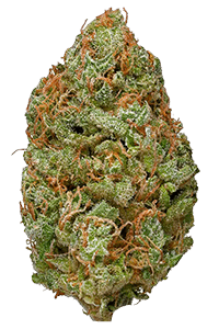 Bubble Gum Weed Bud