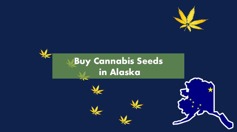 Buy Cannabis Seeds In Alaska Cover Photo