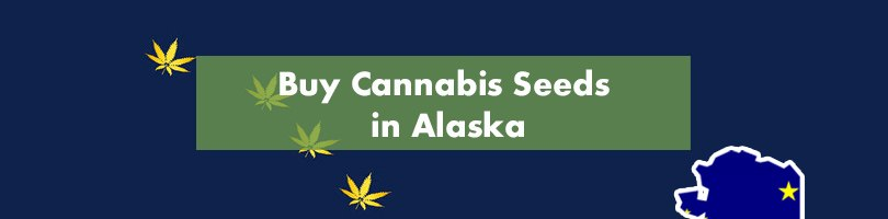 Buy Cannabis Seeds in Alaska Featured Image