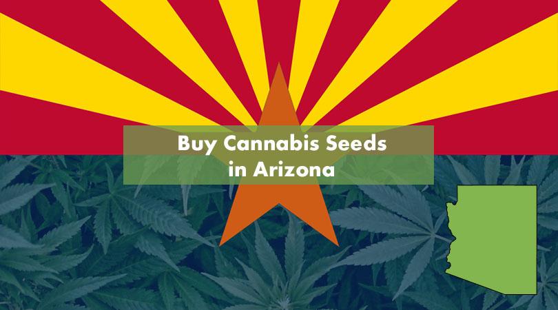 Buy Cannabis Seeds in Arizona Cover Photo