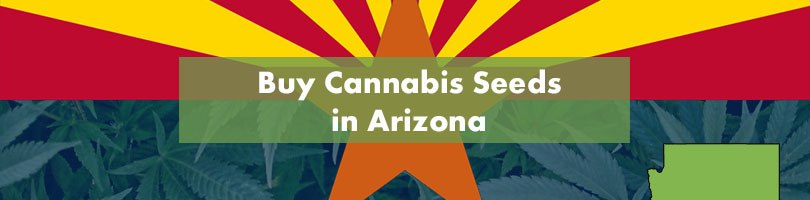 Buy Cannabis Seeds in Arizona Featured Image