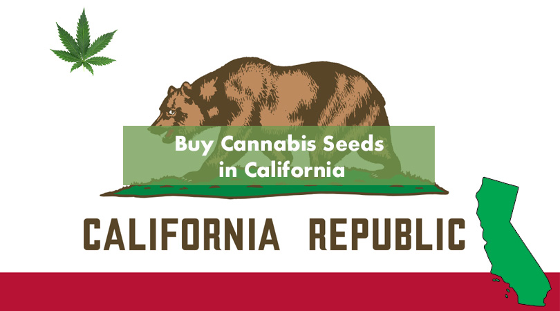 Buy Cannabis Seeds in California Cover Photo