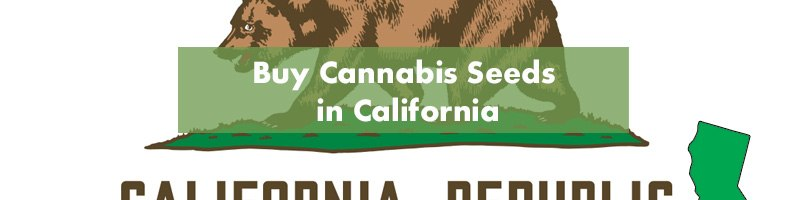 Buy Cannabis Seeds in California Featured Image