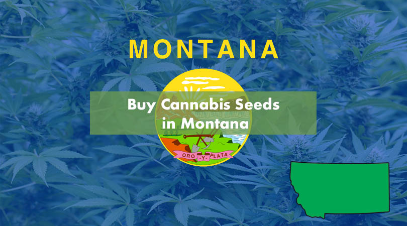 Buy Cannabis Seeds in Montana Cover Photo