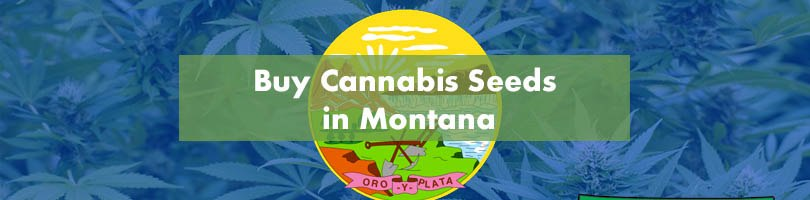Buy Cannabis Seeds in Montana Featured Image