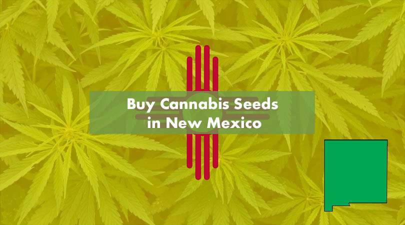 Buy Cannabis Seeds in New Mexico Cover Photo