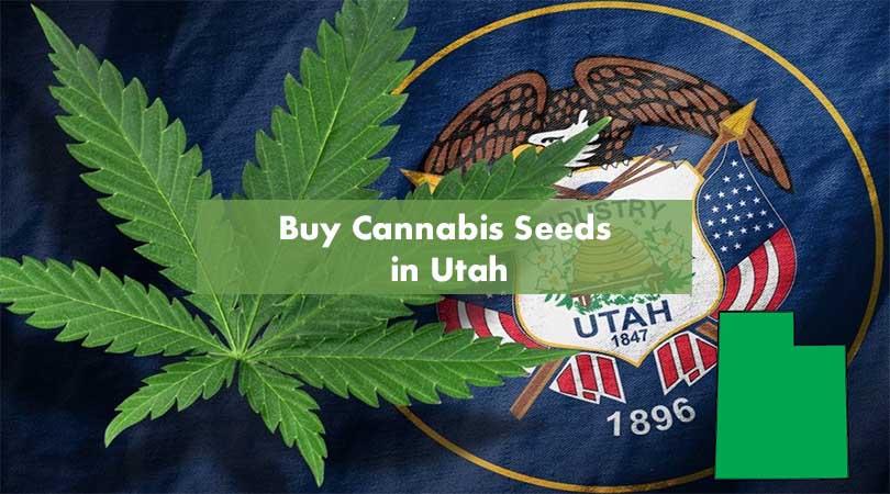 Buy Cannabis Seeds in Utah Cover Photo