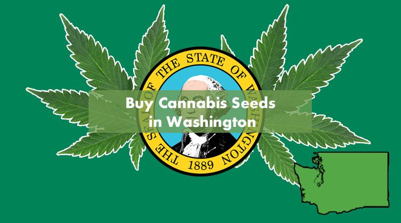 Buy Cannabis Seeds in Washington Cover Photo