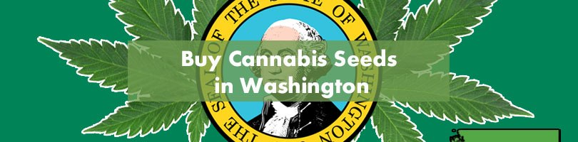 Buy Cannabis Seeds in Washington Featured Image