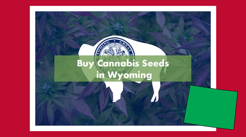 Buy Cannabis Seeds in Wyoming Cover Photo