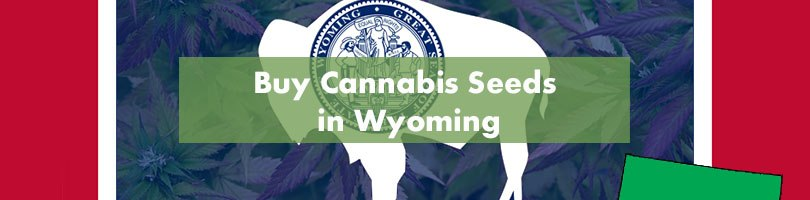 Buy Cannabis Seeds in Wyoming Featured Image
