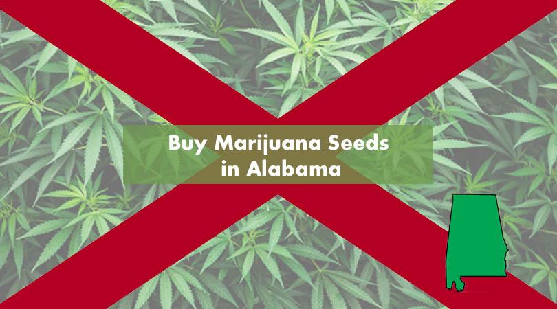 Buy Marijuana Seeds in Alabama Cover Photo