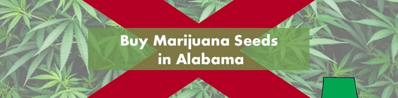 Buy Marijuana Seeds in Alabama Featured Image