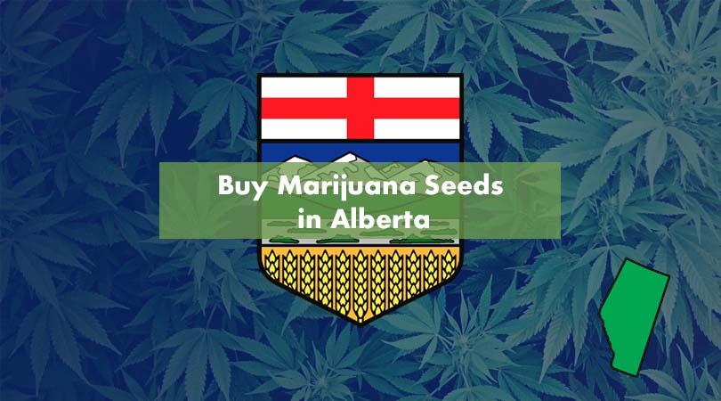 Buyx Marijuana Seeds in Alberta Cover Photo