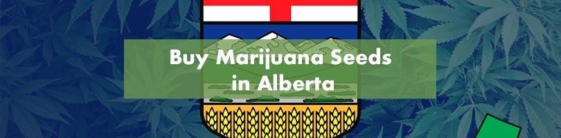Buy Marijuana Seeds in Alberta Featured Image