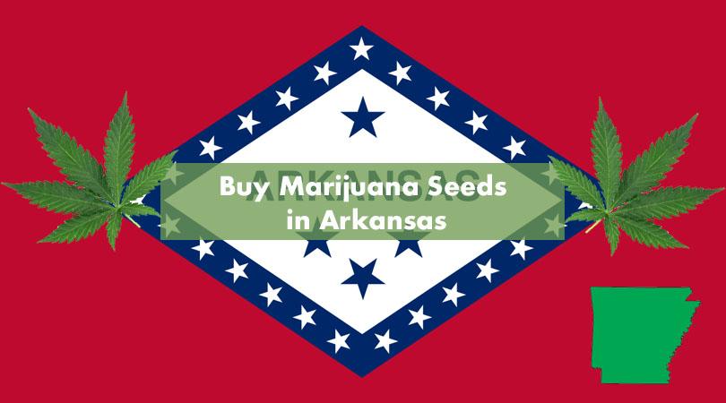 Buy Marijuana Seeds in Arkansas Cover Photo