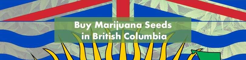 Buy Marijuana Seeds in British Columbia Featured Image