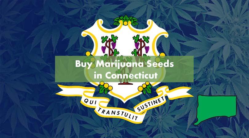 Buy Marijuana Seeds in Connecticut Cover Photo