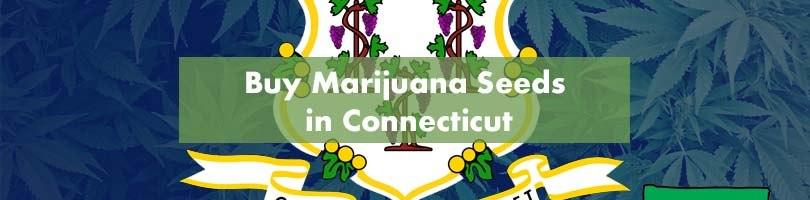 Buy Marijuana Seeds in Connecticut Featured Image
