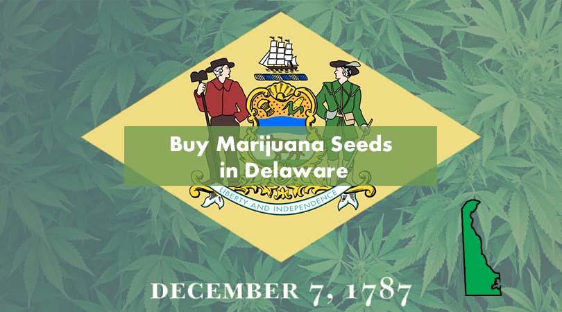Buy Marijuana Seeds in Delaware Cover Photo