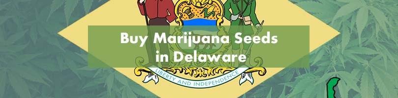 Buy Marijuana Seeds in Delaware Featured Image