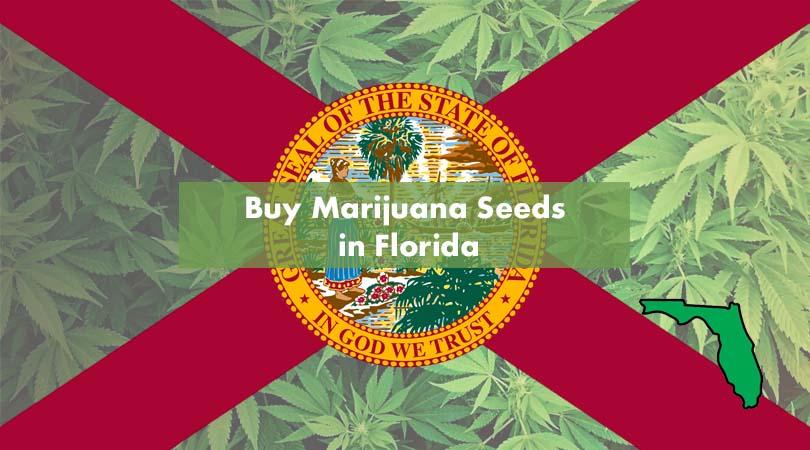Buy Marijuana Seeds in Florida Cover Photo