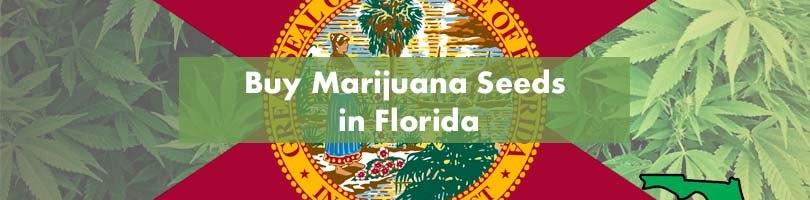 Buy Marijuana Seeds in Florida Featured Image