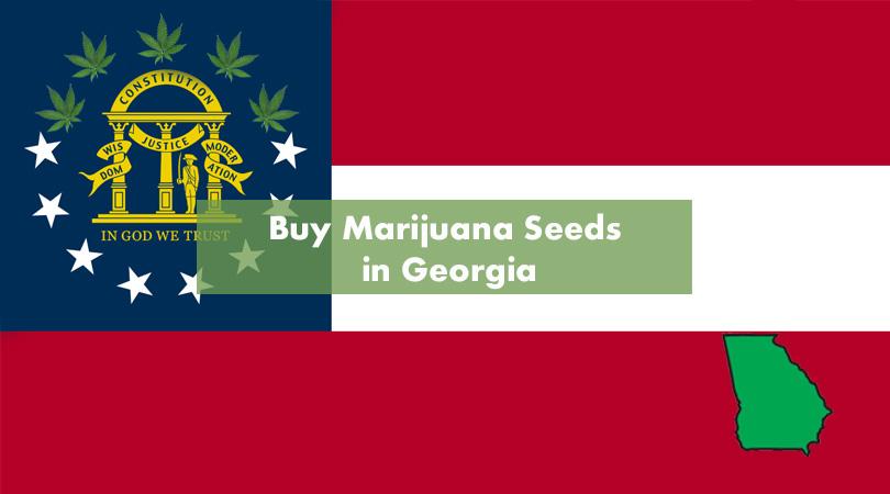 Buy Marijuana Seeds in Georgia Cover Photo