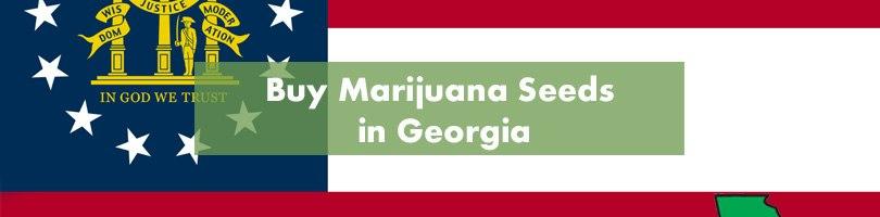 Buy Marijuana Seeds in Georgia Featured Image