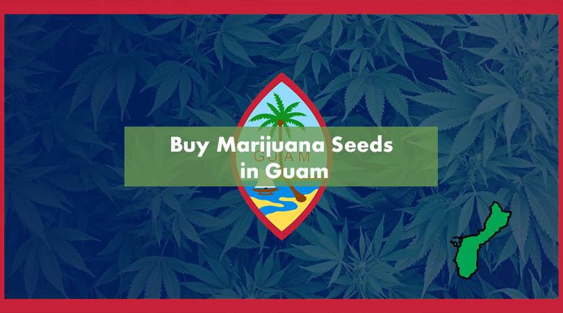 Buy Marijuana Seeds in Guam Cover Photo