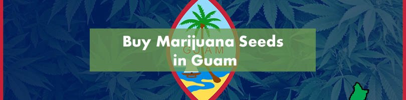 Buy Marijuana Seeds in Guam Featured Image