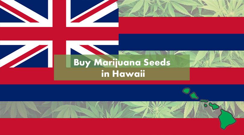 Buy Marijuana Seeds in Hawaii Cover Photo