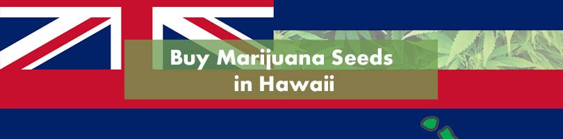 Buy Marijuana Seeds in Hawaii Featured Image