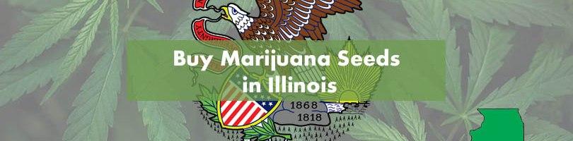 Buy Marijuana Seeds in Illinois Cover Photo