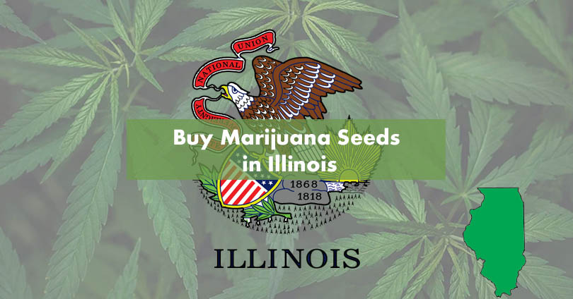 Buy Marijuana Seeds in Illinois Featured Image