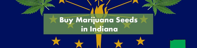 Buy Marijuana Seeds in Indiana Featured Image