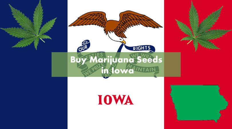 Buy Marijuana Seeds in Iowa Cover Photo