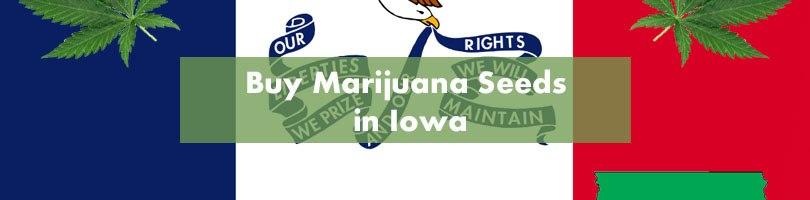 Buy Marijuana Seeds in Iowa Featured Image